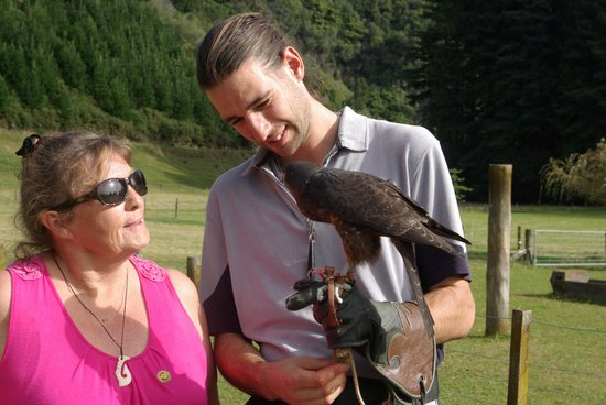 Wingspan National Bird of Prey Centre: Dave from WINGSPAN spending time with mySponsored Falcon,Bindy
