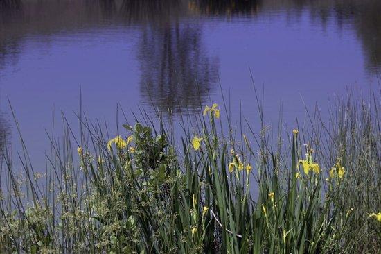 Mountain Glen RV Park & Campground: By the pond