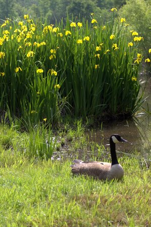 Mountain Glen RV Park & Campground: Flowers and geese everywhere