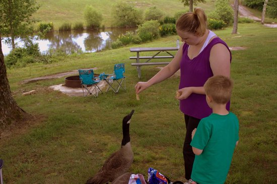 Mountain Glen RV Park & Campground: The geese are veeery friendly!