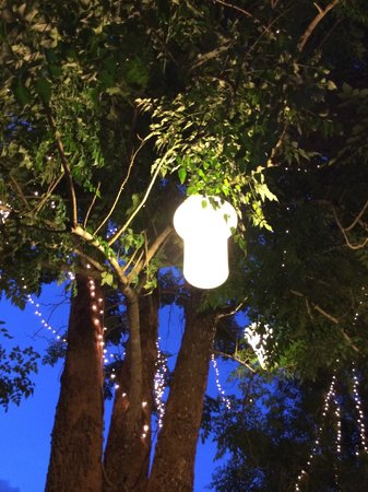 The Scenery Resort & Farm : A lighted tree