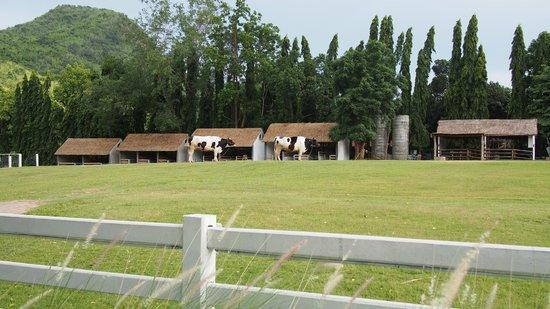The Scenery Resort & Farm : Cowsss...