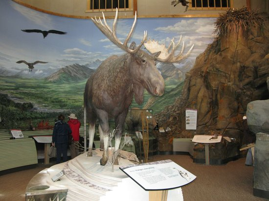 Denali Visitor Center : Wildlife Panorama