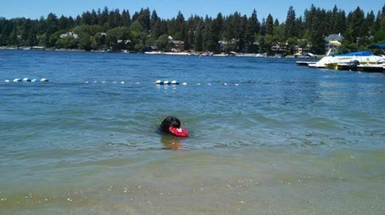 Lake Arrowhead Resort and Spa, Autograph Collection: On the beach at the Lake