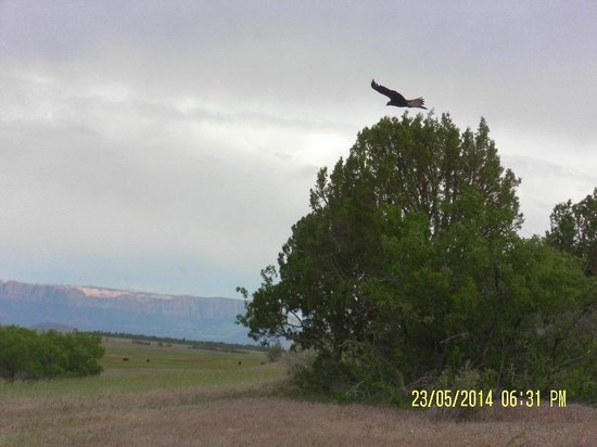 Zion Outback Safaris: Eagle taking off from his perch.  We watched him for several minutes