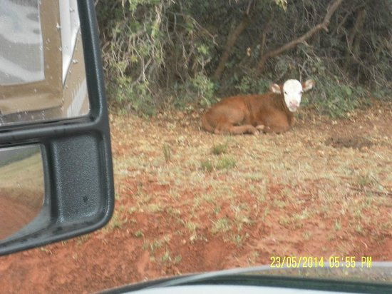 Zion Outback Safaris: Hard to believe there is grazing area and livestock up on top