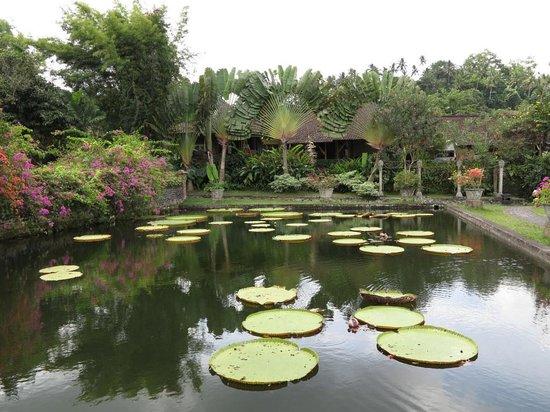 Tirta Gangga: Water garden