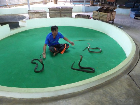Phuket Cobra Show and Snake Farm: snake pit