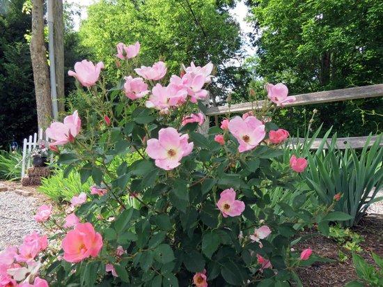 Rose Garden at Braeside Inn