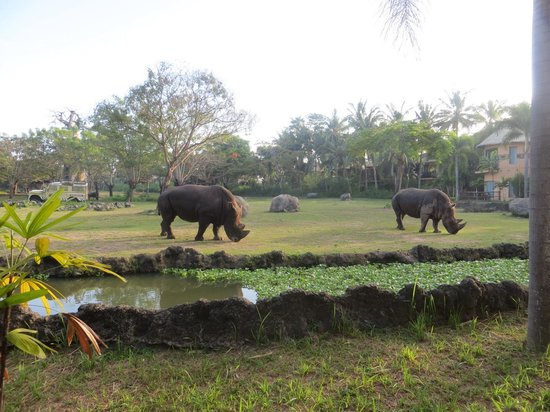 Mara River Safari Lodge: view ouside bedroom window