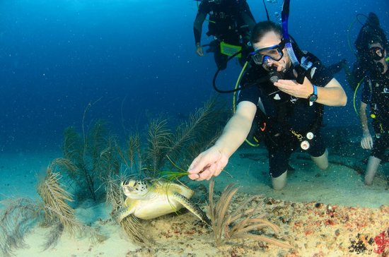 Ocean Explorers Dive Center: feeding a sea turtle