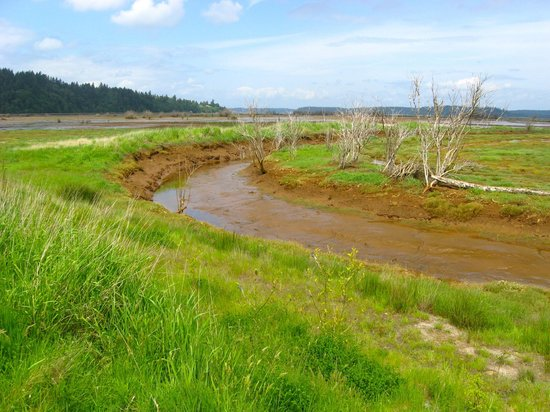Nisqually National Wildlife Refuge: Low tide (they post tide charts on their website)
