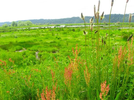 Nisqually National Wildlife Refuge: Wildflowers in spring at Nisqually