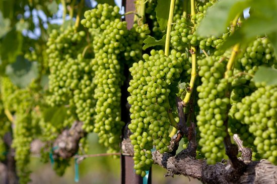 Maui Wine: Happy Grapes
