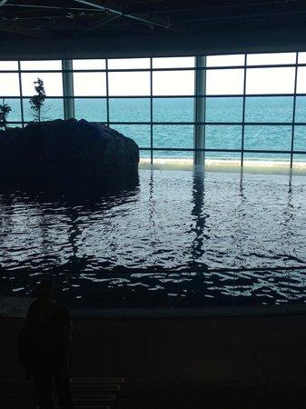 Shedd Aquarium : Lake Michigan view from the oceanarium