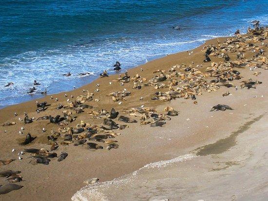 Photo of Estancia Rincon Chico Puerto Madryn