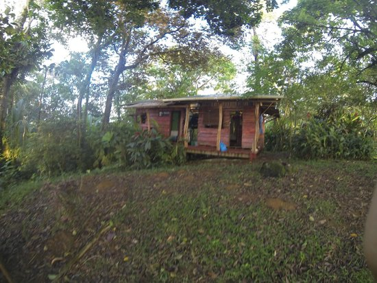 Up in the Hill - Coffee Shop & Organic Farm : our cabin