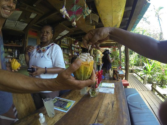 Up in the Hill - Coffee Shop & Organic Farm: cocoa fruit