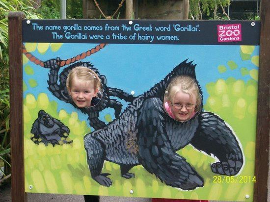 Bristol Zoo Gardens: Our grandaughter's having a great time!