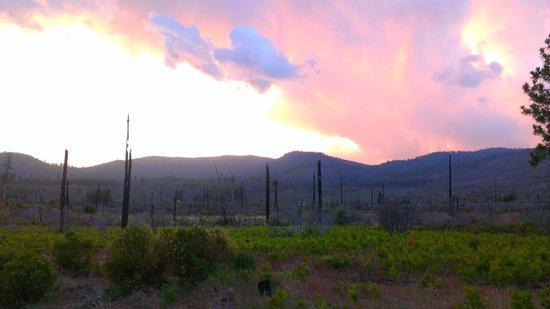 Yosemite Hilltop Cabins: Still burned areas - beautiful and haunting