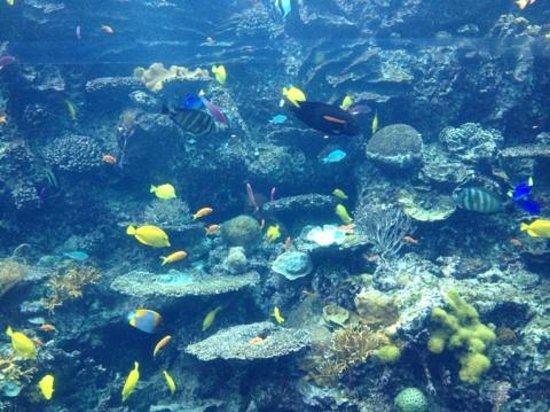Mana ray 39 s picture of georgia aquarium atlanta for Georgia freshwater fish