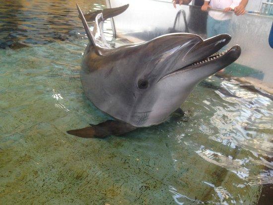 Guangzhou Zoo: :)