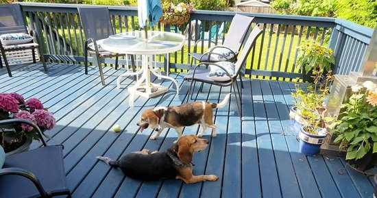 ELES ESCAPE B&B by the SEA: Beagles Enjoying the Sun Deck