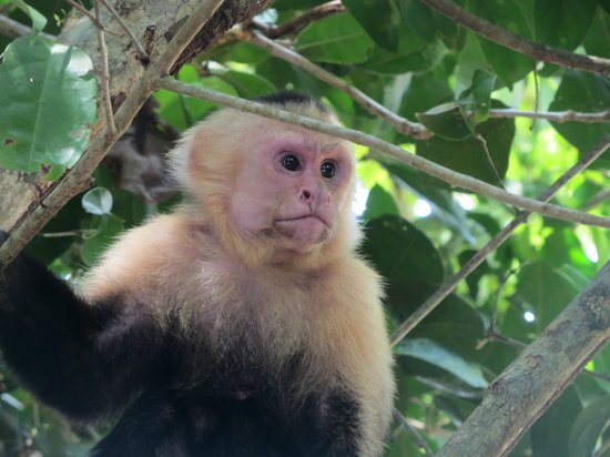 Manuel Antonio Expeditions: What we saw in the park!