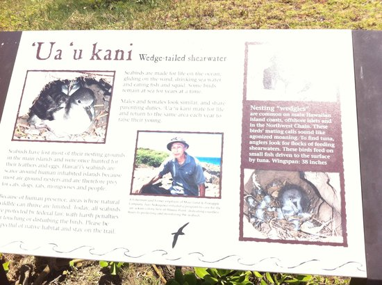 Kapalua Coastal Trail: If you are lucky you will meet Isao.  He is passionate about the native birds.