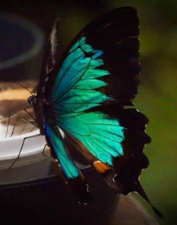 Australian Butterfly Sanctuary : Stunning