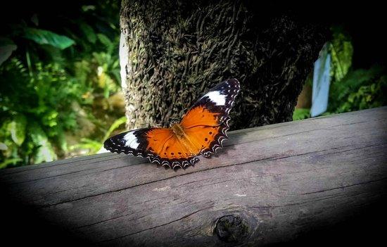 Australian Butterfly Sanctuary : 2