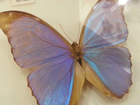 Australian Butterfly Sanctuary : My fav.