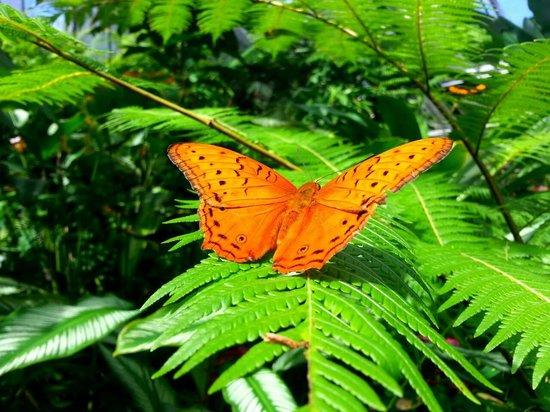 Australian Butterfly Sanctuary : 1