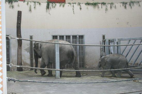 Budapest Zoo & Botanical Garden: Слониха и малыш