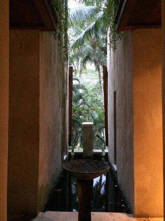Four Seasons Resort Bali at Sayan : A glimpse of the jungle