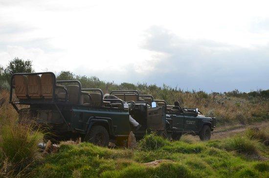 Gondwana Game Reserve : Game Drive