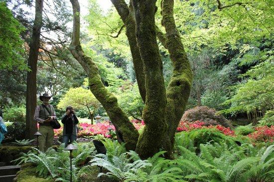 The Butchart Gardens : Japanese Garden