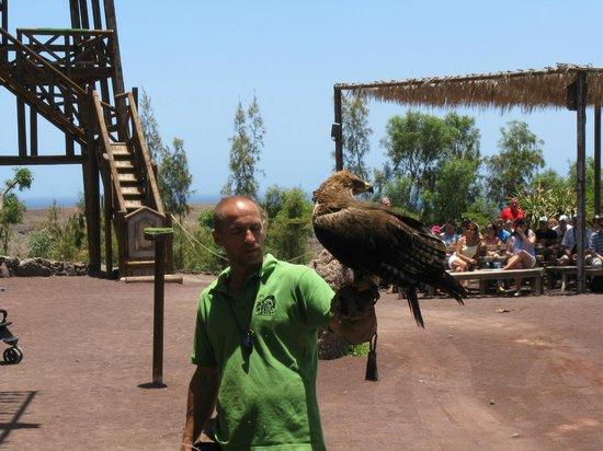 Ptactwo łowne - Picture of Oasis Park Fuerteventura, Fuerteventura - TripAdvisor