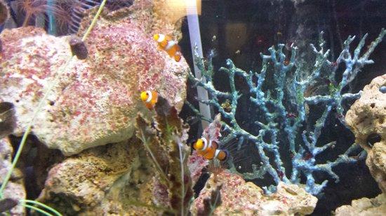 Matlock Bath Aquarium & Exhibitions: Aquarium & Exhibition - Where's Nemo