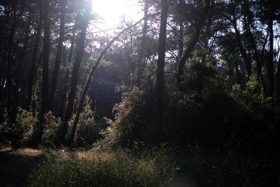 Voyage Sorgun: волшебный лес