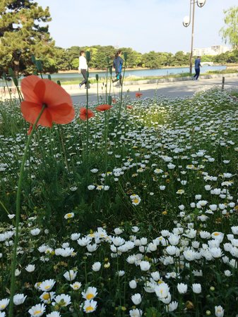 Ohori Park: いつもキレイに手入れがされている花壇