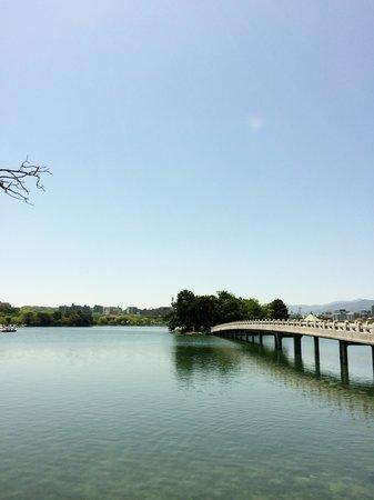 Ohori Park: カモメやカメやカモが橋の上から眺められる