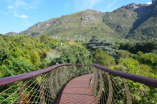 Newlands, South Africa: Canopy Walk Bridge