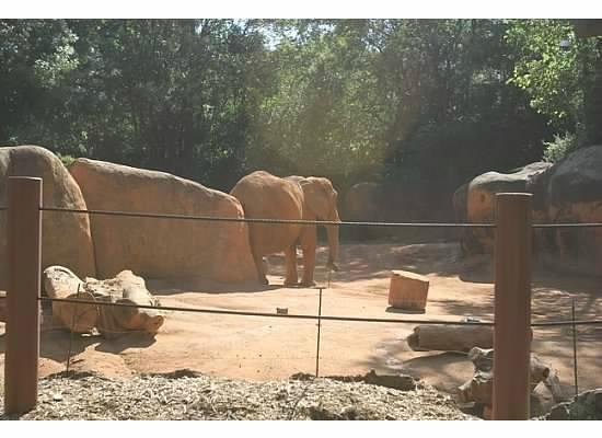 Zoo Atlanta: Come back...