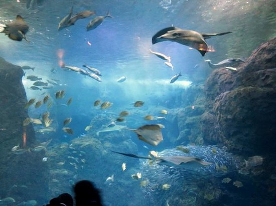 Enoshima Aquarium : 大水槽