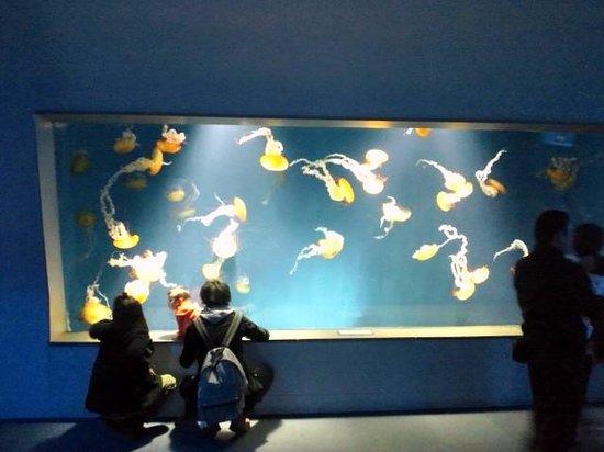 Enoshima Aquarium : クラゲ水槽