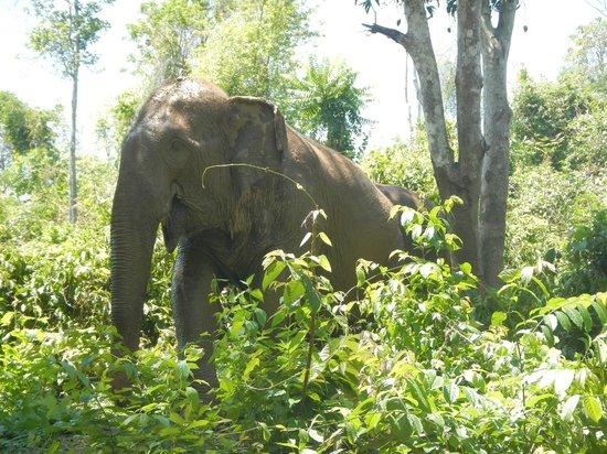 Boon Lott's Elephant Sanctuary : Pang Suai found something funny...