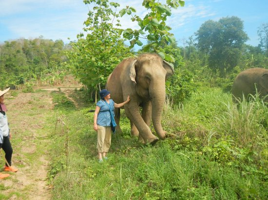 Boon Lott's Elephant Sanctuary : Me and Lotus out for a walk...