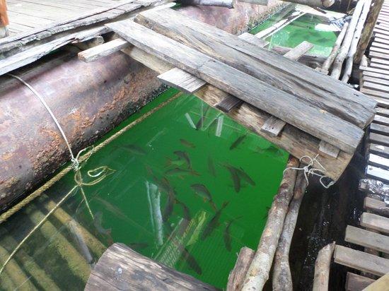 Raft during the rain - Foto di Cheow Lan Dam (Ratchaprapa ...