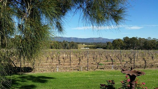 Hunter Valley Wine Tasting Tours : Blueberry Hill Vineyard
